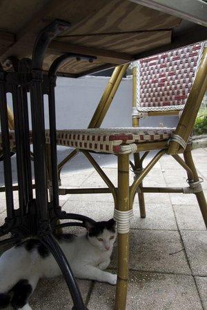 Cafe La Princesa: cat