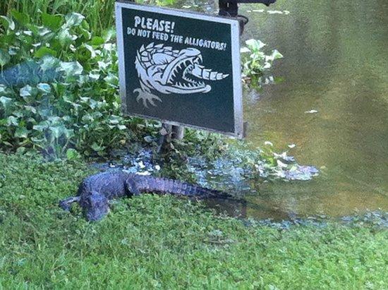 Restaurant des Familles: Gators