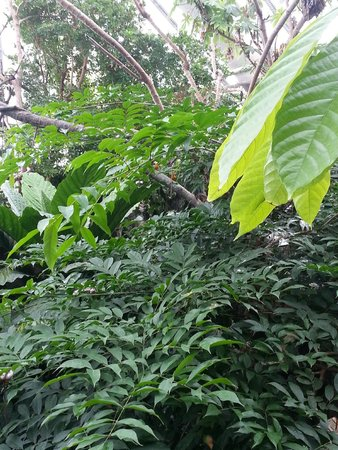 National Aquarium : The rain forest exhibit, with some tropical birds living there.