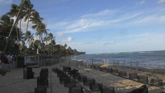 Praia do Forte: Ninhos Projeto Tamar