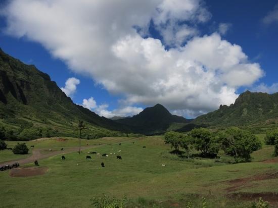 Kualoa : Amazing View