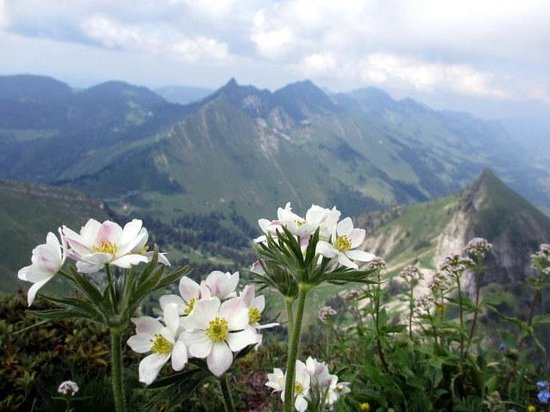Rochers-de-Naye : View from the top