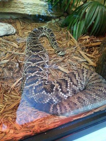 ZooAmerica North American Wildlife Park: Snake