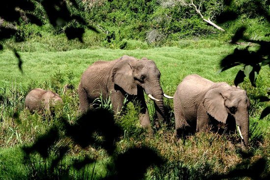 Botlierskop Private Game Reserve: Elephants on game drive