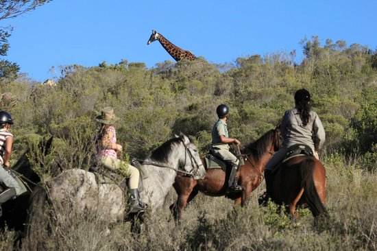 Botlierskop Private Game Reserve: Horseback Safari