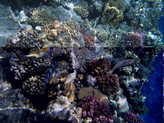 Dreams Beach Resort: Коралы