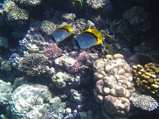 Dreams Beach Resort: Рыбы бабочки