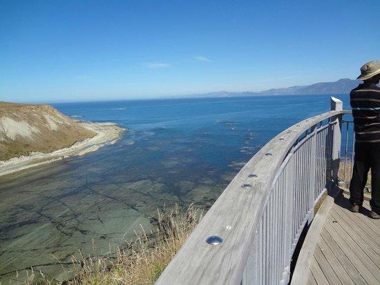 Kaikoura Peninsula Walkway: Walk up the cliff hugging the shore