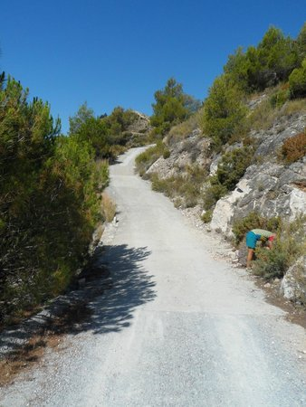 Life Adventure: Jeep Tours & Activities in Nerja: Joky chasing a lizard around a bush