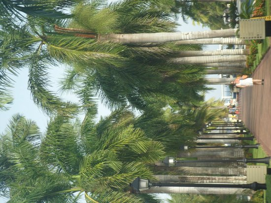 Hotel Riu Palace Riviera Maya : shady area