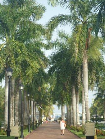 Hotel Riu Palace Riviera Maya: shady area