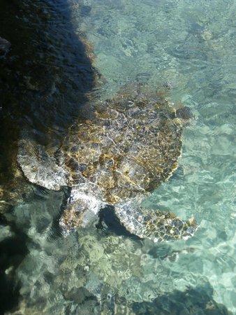 Xcaret Eco Theme Park: Criadero de tortugas
