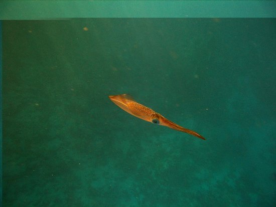 Dreams Beach Resort: Любопытный кальмар