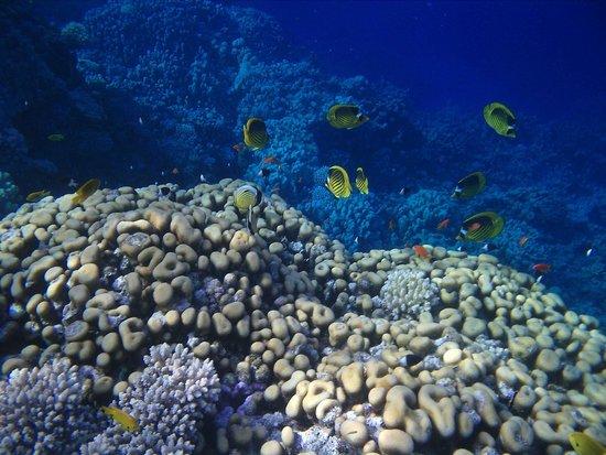 Dreams Beach Resort: Риф с обилием рыбок