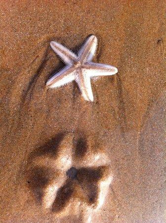 Neelams The Grand : Морские звезды на пляже перед закатом