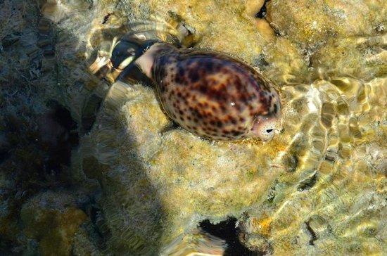 Coral Sea Aqua Club Resort: Plaża