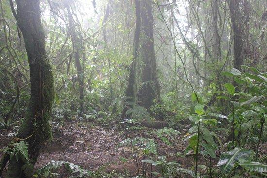 Parque y Jardines de Cerro Chato ANC: Cerro Chato Trail mid way