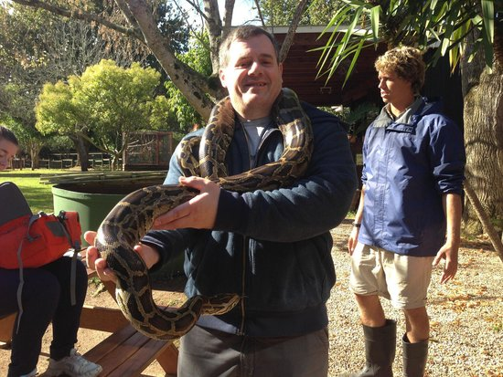 Lawnwood Snake Sanctuary : Big snake! Fortunately very helpful & knowledgeable guide.