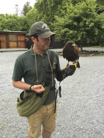 Ireland's School of Falconry : Our instructor, Tommy