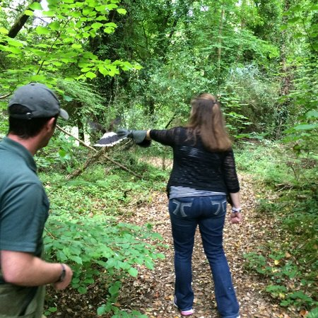 Ireland's School of Falconry : Flying our hawk