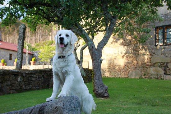 Casa Grande do Bachao: Cora en el jardín