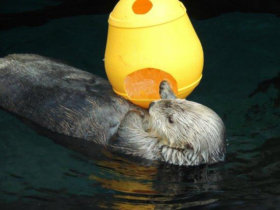 Lisbon Oceanarium : La lontra e il ghiaccio