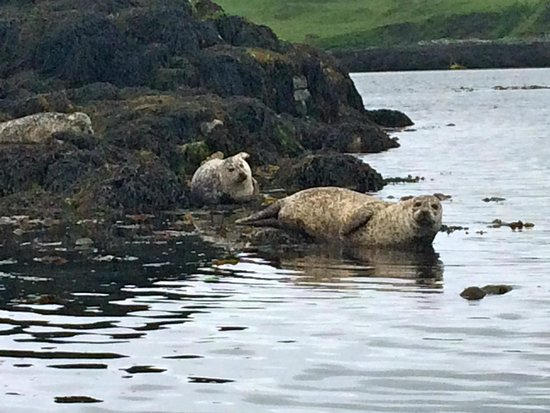 Dunvegan Castle & Gardens: Dunvegan Seal Colony