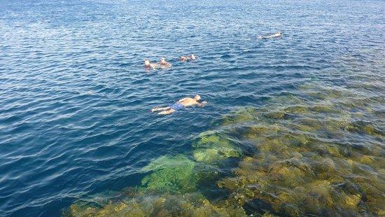 Rixos Sharm El Sheikh : Snorkelling
