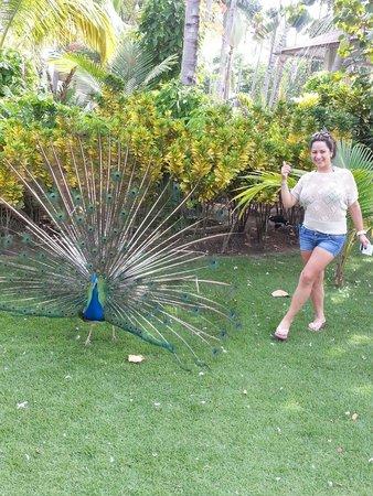 Vista Sol Punta Cana : Pavo Real una belleza