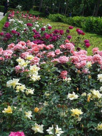 Rose Garden (Rosengarten): Flores