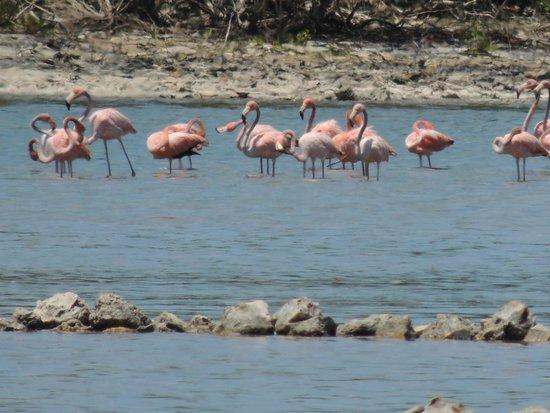 Stella Maris Resort Club: 90 minutes away flamingo; very hard to spot