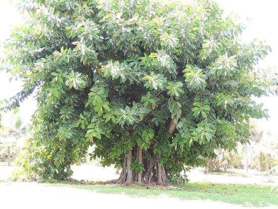Stella Maris Resort Club: pretty tree