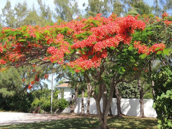 Stella Maris Resort Club: beautiful trees