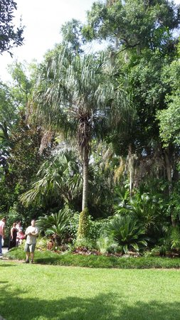 Harry P. Leu Gardens : Palm garden