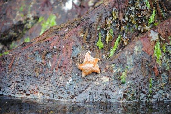 Ketchikan Kayak Co: A star fish, as seen at low tide!