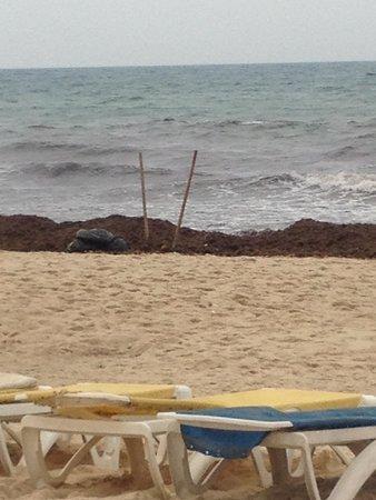 Iberostar Averroes: The sunbeds match the beach!