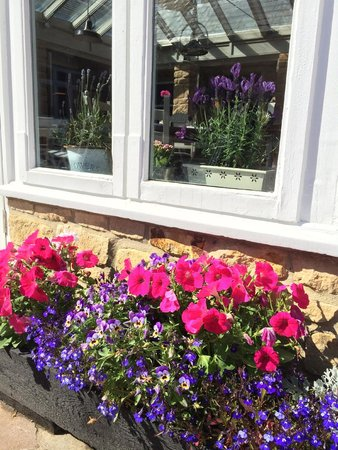 The Ilchester Arms Hotel Restaurant: Beautiful flowers in bloom
