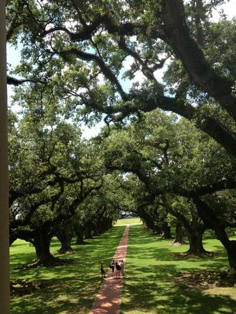 Oak Alley Plantation: Notice the size of the people compared to the size of the oaks!!!