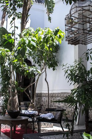 Hotel & Spa Riad Edward : Beautiful greenery by the pool