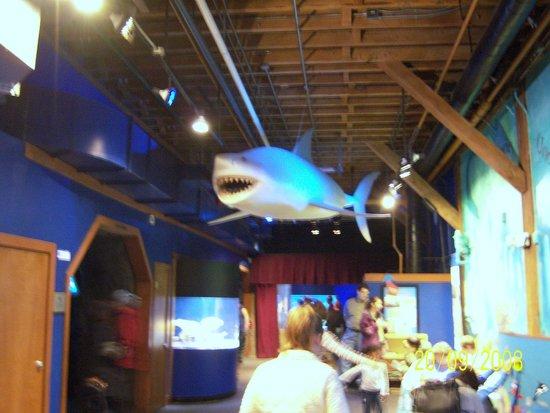 Seattle Aquarium : SA8