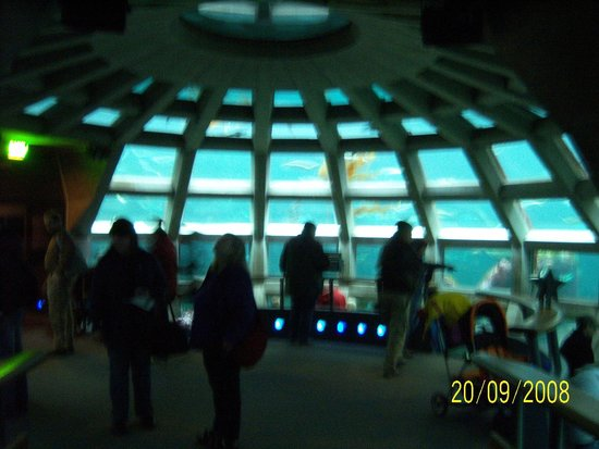 Seattle Aquarium : SA7