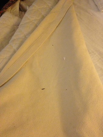 Diamond Hotel : The Bed Sheet