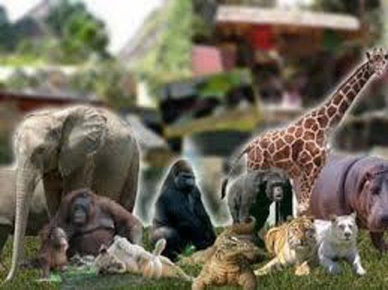 Zoologico Guadalajara: ZOOLOGICO DE GUADALAJARA, JALISCO