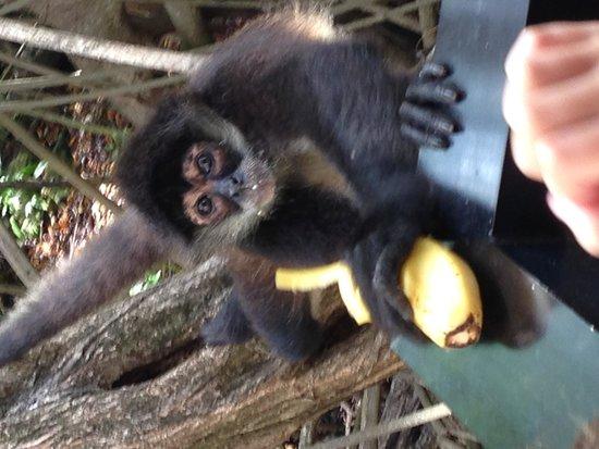 Sandos Caracol Eco Resort : monkey