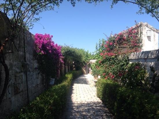 Masseria Torre Coccaro : The beautiful gardens