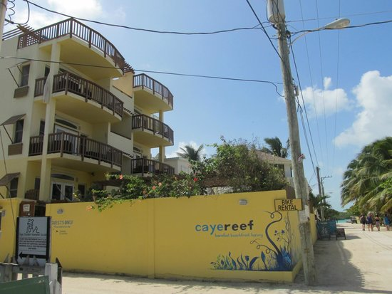 CayeReef: View of Caye Reef