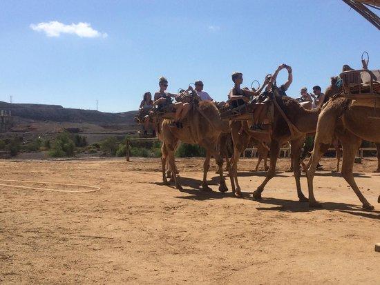 Barceló Fuerteventura Thalasso Spa: Oasis Park