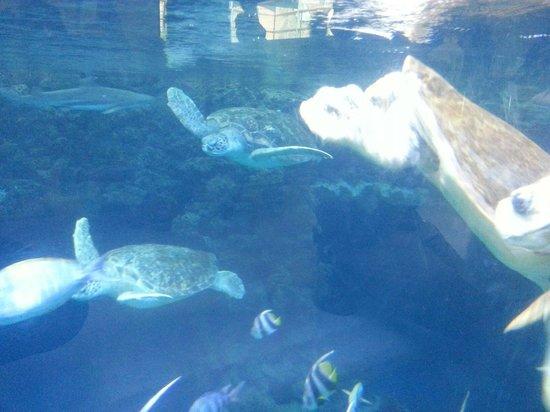 Deutsches Meeresmuseum: Meeresschildkröten