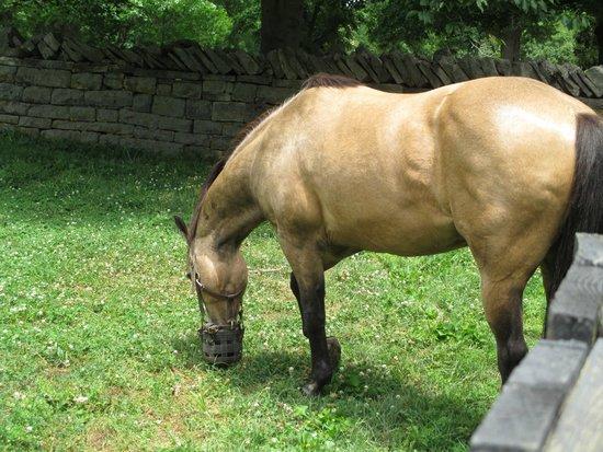 Belle Meade Plantation: Horses