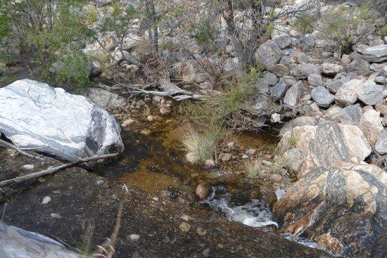 Sabino Canyon: Sabinoy Canyon